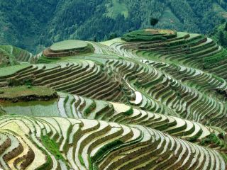 Dragonback Rice Terraces